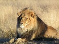 اسلام آباد میں چڑیا گھر میں پنجرے میں آگ لگنے سے شیر ہلاک