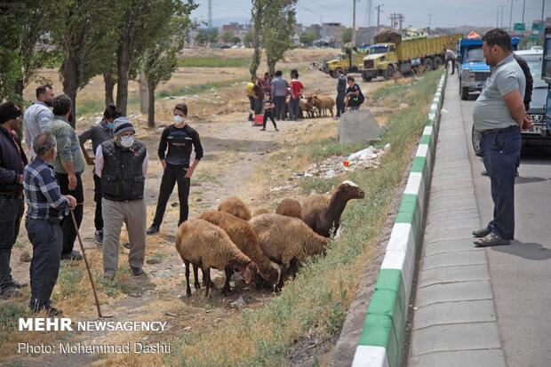 """İran'da """"Kurban Bayramı"""" heyecanı"""