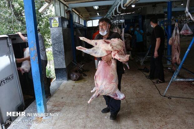 ذبح قربانی در کشتارگاه صنعتی قم