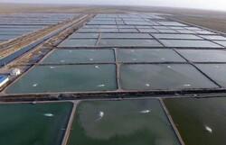 سیریک در منطقه مکران بالاترین ظرفیت آبزی پروری دارد