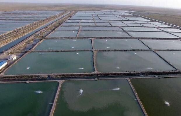 تولید ۵ میلیون تن ماهی پرورشی در کشور/ آبزی پروری گسترش می یابد