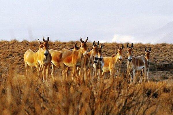 تشدید حفاظت از گورهای ایرانی در منطقه بهرام گور