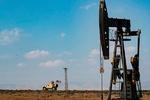قراردادی که سارقان را به جان هم انداخت/ نفت عامل اختلاف متحدان