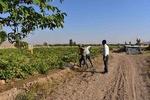 انتقال موقت آب به مزارع روستای «کره» شهرستان دهاقان