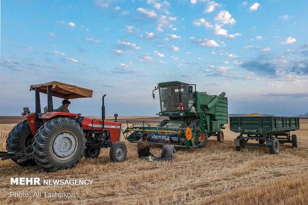 نافذة على جهود المزارعين في موسم حصاد القمح
