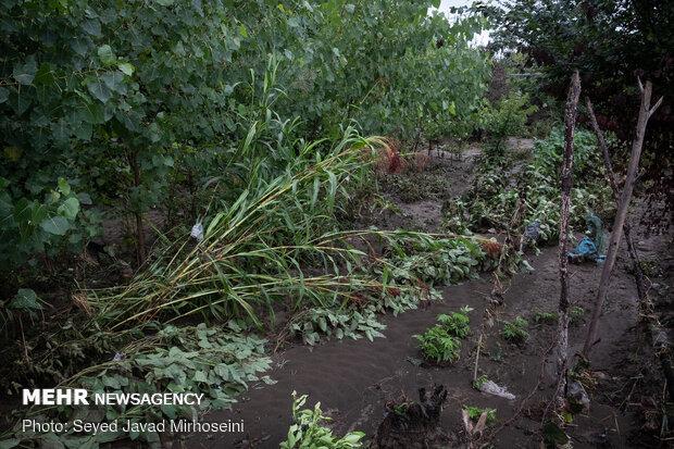 خسارات سیل به شالیزار های رشت و رودسر