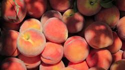 عید غدیر کے موقع پر پھلوں کی نذر