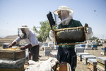 İran'da arıcılık ve bal üretimi