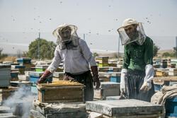 Honey extraction in Daryan, NW Iran