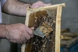 کشف بیش از ۲ تن عسل تقلبی در ساوجبلاغ