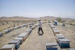 آذربائیجان کے علاقہ شبستر دریان میں شہد کی پیداوار