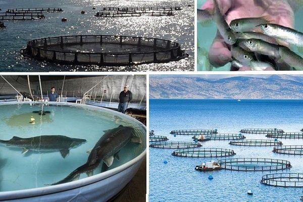 ايران .. قفزة في صادرات الثروة السمكية من 1،830 طنأً الى 4،155 طناً في هذا العام