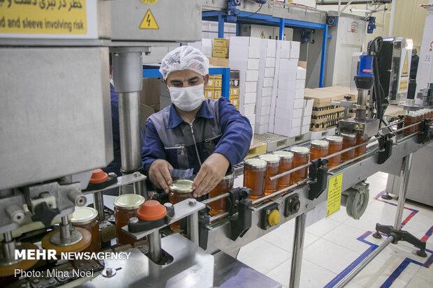 Honey extraction in Daryan