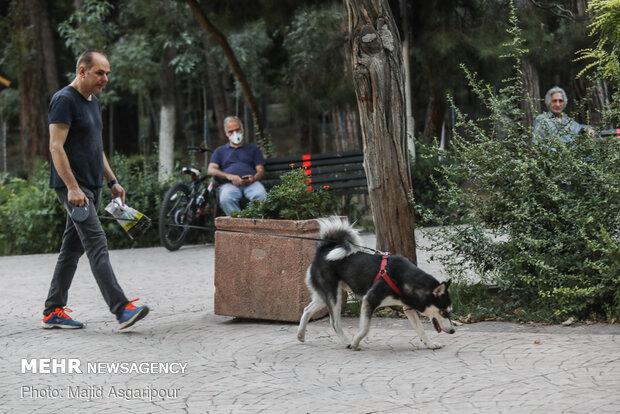 سگ گردانی در اماکن عمومی و عدم رعایت موارد بهداشتی خطر ابتلا به ویروس کرونا را افزایش می دهد
