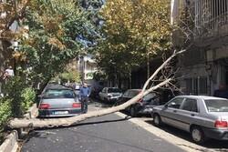 سقوط ۱۳ درخت و ۳ تیر چراغ برق بر اثر وزش باد در اصفهان