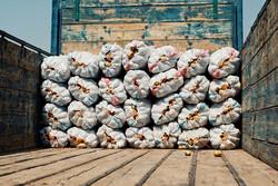 ۵ هزار تن سیب زمینی از چهارمحال و بختیاری صادر شد