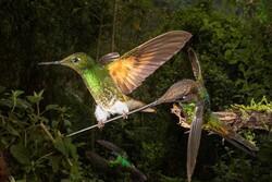 برترین عکس های دنیا با موضوع پرندگان ۲۰۲۰
