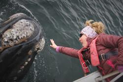 تماشای نهنگ از نزدیک