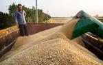 مطالبات کشاورزان در چهارمحال و بختیاری در حال پرداخت است
