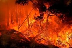 امریکی ریاست کیلی فورنیا کے جنگلات میں لگی آگ بے قابو ہوگئی