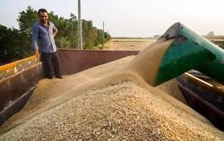 کشاورزان گندم تولیدی خود را فقط به مراکز خرید دولت تحویل دهند