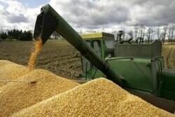 أكثر من 8 ملايين طن مشتريات ايران من القمح المحلي