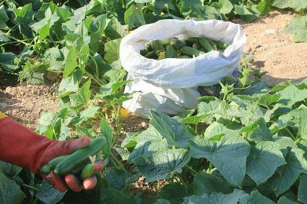 عراق واردات ۲۹ محصول کشاورزی را ممنوع کرد,