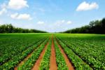 کشاورزان پلدختری در انتظار تحقق وعدههای مسئولان/ از ایستگاههای پمپاژ آب چه خبر؟