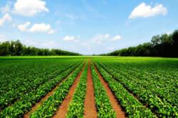 کشاورزی نوین خراسان شمالی در بن بست/ دانشکده شیروان رها شده است