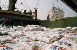 دپوی برنجهای در معرض فساد در بندر شهید رجایی و بوشهر/ مشکل ربطی به شرایط نگهداری در بنادر ندارد