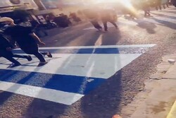 شاهد زائري كربلاء المقدسة يدوسون بالاقدام اعلام الاحتلال الامريكي والكيان الصهيوني / فيديو