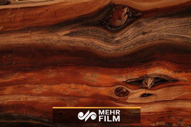 در اعماق چوب چه میگذرد؟