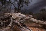 حیات وحش استرالیا از نگاه عکاسان