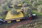 ماشینی که میوه درختان را برداشت می کند