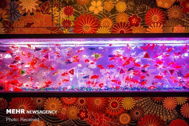 Japonya'nın yaşayan müzesinde 30 binden fazla balık sergileniyor