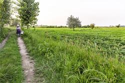 جایگاه اول پارسآباد در تولید بادام زمینی/۲۳۰ هزار نفر روز فرصت اشتغال ایجاد شد