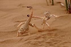برترین عکسهای حیات وحش ۲۰۲۰