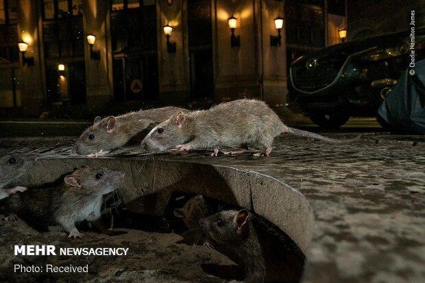 برترین عکسهای حیات وحش 2020 به انتخاب موزه تاریخ طبیعی لندن
