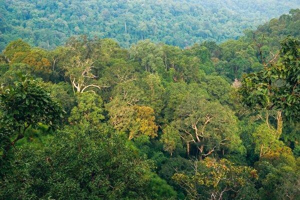 تهدید جنگلها، از آتش تا ملخ