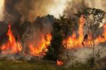 نمایی از آتش سوزی ارتفاعات روستای مانیان جهرم