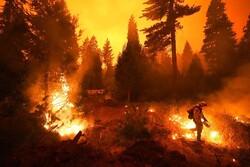 Kaliforniya'daki orman yangınları durmuyor