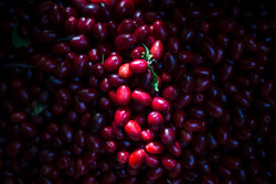 Cranberry harvest in Iran's Hire village