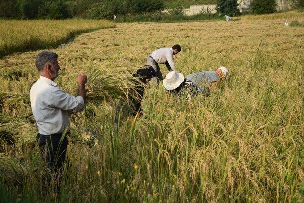 مصرف ۳ هزار تن سموم کشاورزی در مازندران