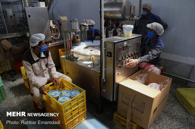İran'daki süt ürürnleri fabrikasından fotoğraflar