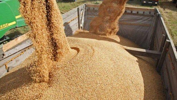 افزایش چشمگیر سهم دولت در واردات نهادههای دامی