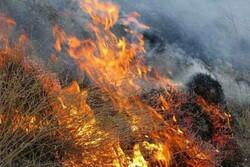 کاهش ۷۰ درصدی آتش سوزی در مزارع دهلران
