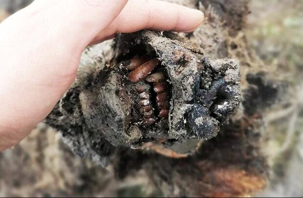 جسد خرس ۳۹ هزار ساله کشف شد