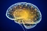 مولکولهای مصنوعی مغز موش را ترمیم کردند