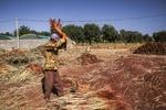 İran'da süpürge yapma mesleği