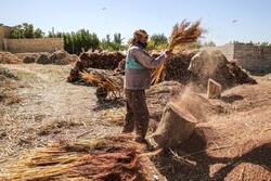 جاروبافی سنتی در روستای ملاحسن